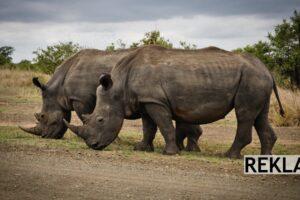 Safari i Kenya: Det du trenger å vite